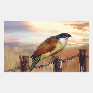 Burchells Coucal Kuckuckvogel Rechteckiger Aufkleber