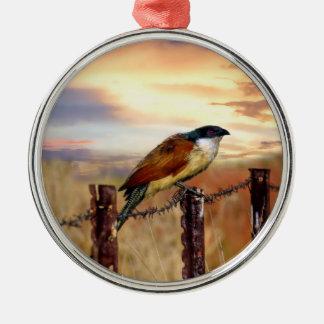 Burchells Coucal Kuckuckvogel Silbernes Ornament