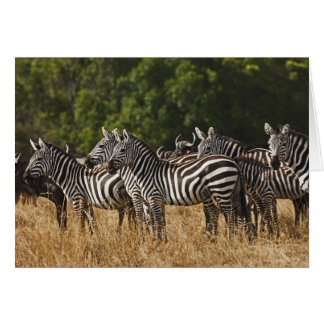Burchells Zebras (Equus Burchellii) wie herein Karte