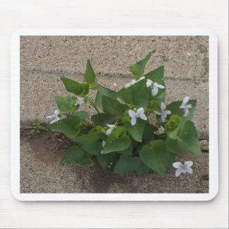 Bürgersteig-Blume Mousepads