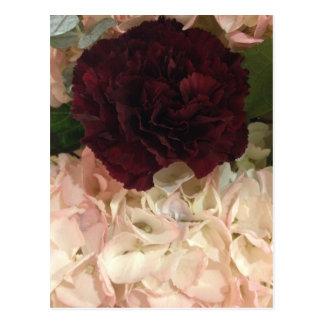 Burgunder-Gartennelke und rosa Postkarten