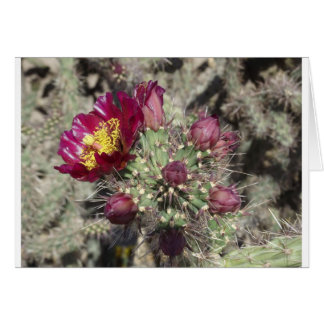 Burgunder-Kaktus-Blumen Karte