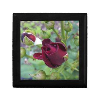 Burgunder-Rose nach Regen Erinnerungskiste