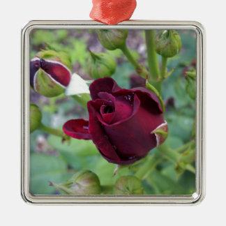 Burgunder-Rose nach Regen Silbernes Ornament