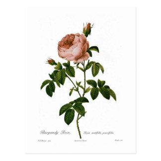 Burgunder-Rose Postkarte