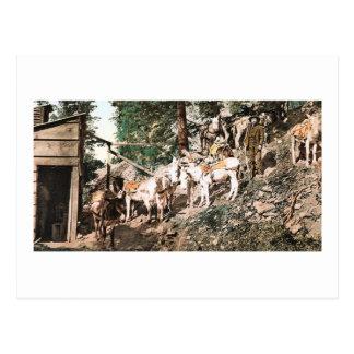 Burros am Silberbergwerk Colorado 1904 Postkarte