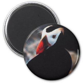 Büscheliger Papageientaucher Runder Magnet 5,7 Cm