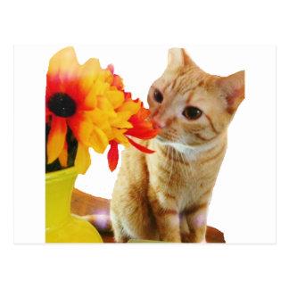 """""""Butter sagt hallo"""" niedliche Katzen-Postkarte Postkarte"""