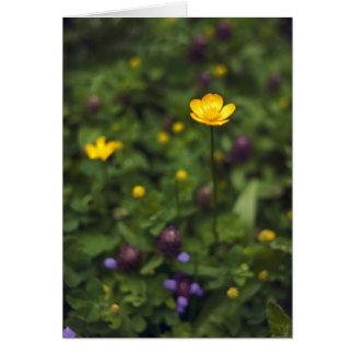 Butterblume-wilde Blumenwiese Karte