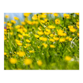 Butterblumeen in der Bewegung Postkarte