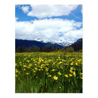 Butterblumeen nahe bringen Lassen, Nordkalifornien Postkarte