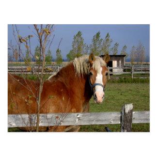 Buttertoffee und beige Pferd, die Kamera-Aff Postkarte