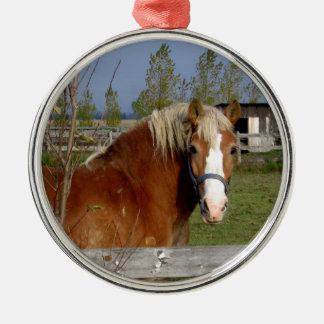Buttertoffee und beige Pferd, die Kamera-Aff Silbernes Ornament