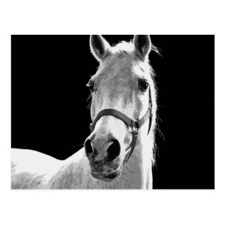 BW-Pferd Postkarte