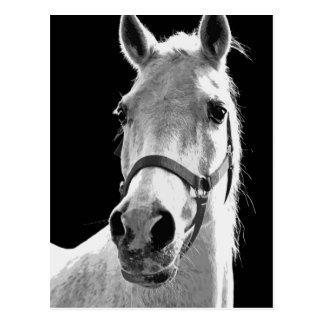 BW-Pferd Postkarten