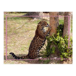 c-2011-jaguar-046 postkarte