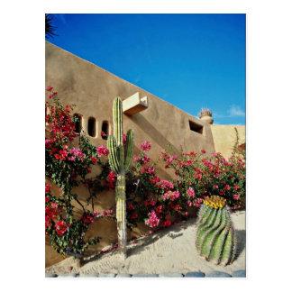 Cabo San Lucas, Baja, Mexiko Blumen Postkarte