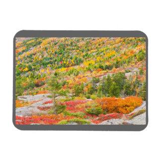 Cadillac-Berg im Fall, Acadia-Nationalpark Magnet