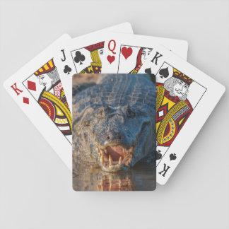 Caiman zeigt seine Zähne, Brasilien Spielkarten