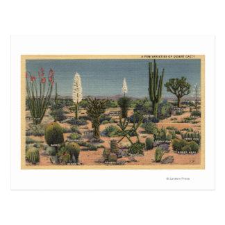 CaliforniaVarieties der Wüsten-Kakteen Postkarte