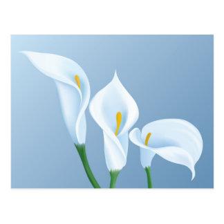 Calla-Blumen Postkarte
