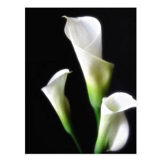 Calla-Lilie 3 Postkarte