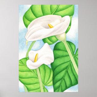 Calla-Lilien Posterdruck
