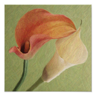 Calla-Lilien Plakatdrucke
