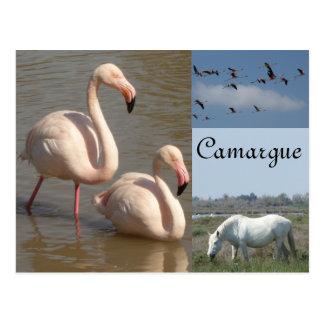 Camargue Postkarte