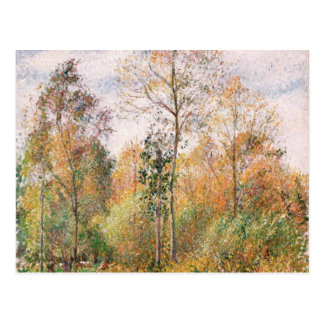 Camille Pissarro - Herbst, Pappeln, Eragny Postkarten