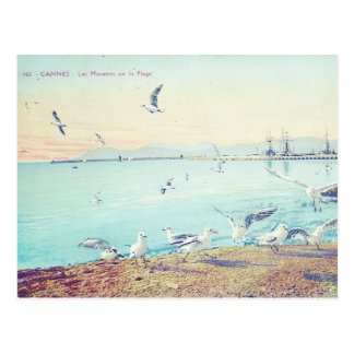 Cannes-Strand-Seemöwen Postkarte