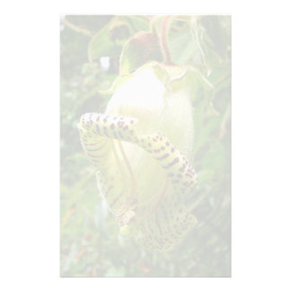 Capanea Grandiflora Briefpapier