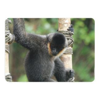 Capuchin-Affe 12,7 X 17,8 Cm Einladungskarte