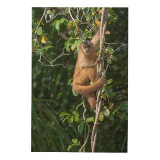 Capuchin-Affe-Klettern Holzleinwand