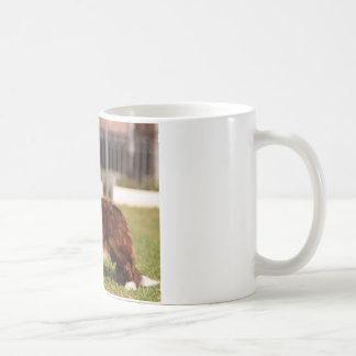 Cardigan_Welsh_Corgi full.png Kaffeetasse