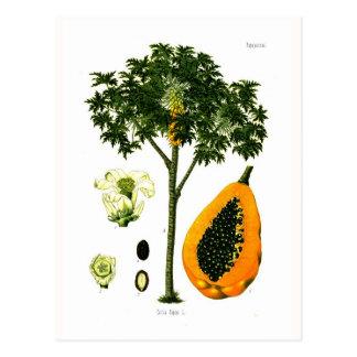 Carica Papaya (Papaya) Postkarte