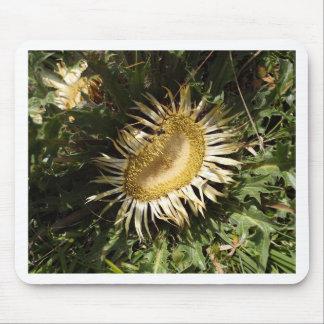 Carline Distel (Carlina acanthifolia) Mousepad