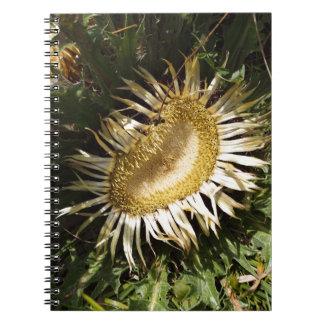 Carline Distel (Carlina acanthifolia) Notizblock