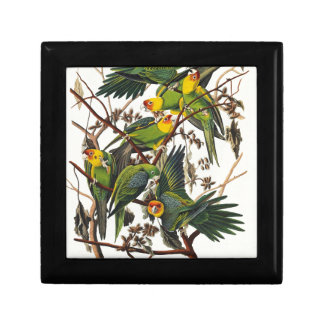 Carolina-Papagei - John James Audubon (1827-1838) Erinnerungskiste