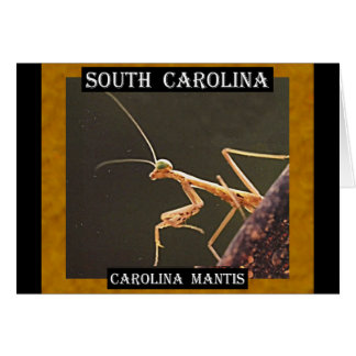 CarolinaMantis (South Carolina) Karte