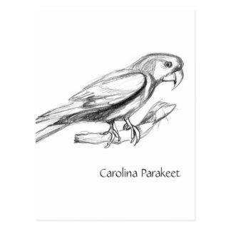 Carolinaparakeet-Bleistift-Skizze-Postkarte Postkarten