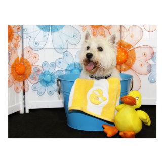 Carson - Westhochland Terrier -6 Postkarten