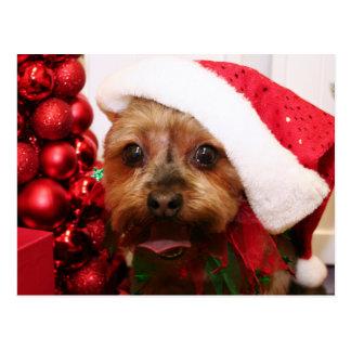 Cassie - Yorkshire Terrier - Scharr Postkarte