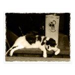 Cat at a restaurant near menu in Paris, France Postkarte