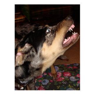 Catahoula Leopard-Hund, der Zähne zeigt Postkarte