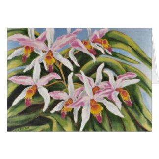 """Catalaya Orchideen "" Karte"