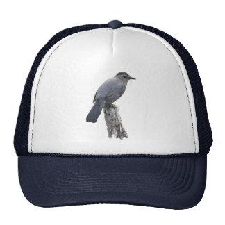 Catbird Netz Caps