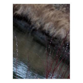 CATC Catkins bei The Creek Postkarte