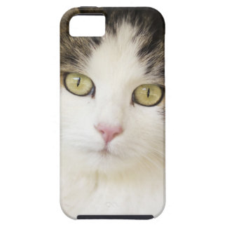 CATS PHOTOGRAPHY COVER