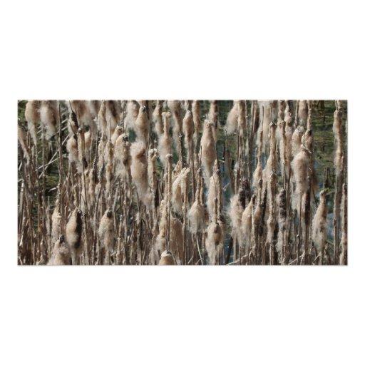 Cattail Individuelle Photo Karten